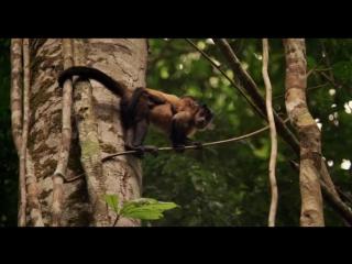 Амазония: Инструкция по выживанию [2014]