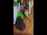 Мишка и Плюшка(котя)