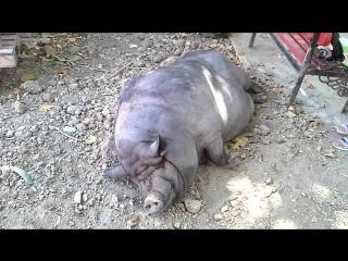 Поросенок Фунтик в детском парке Севастополя))