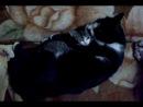 самая лучшая нянька мой Кот.