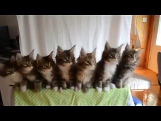 Котята зажигают