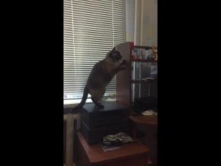 Мой кот играет с попугаем
