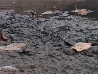 Загрязнение воды в Санкт-Петербурге