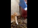 Не когда не доводите котов!!! Я чуть не умер со смеху!!! Лева беги!!! XD
