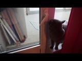 Как мой кот открывает дверь на балкон