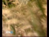 28.10.2014-Командорские острова(Камчатский край,Россия)(Россия,2011г.)Часть 2.(Дата-28.10.2014г.,2200мск.Источник-RTG)
