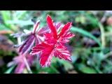 «вот и осень...» под музыку Владимир Асмолов - Вот и Осень (версия 2011). Picrolla