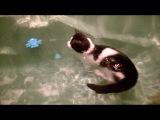 Ничего необычного..просто кошка купается
