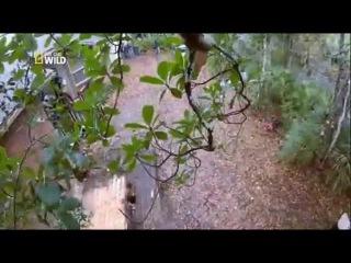 Nat Geo Wild HD ru Мастера водоёмов  Добро пожаловать в джунгли 4 серия / Nat Geo Wild HD ru of the Master of reservoirs Welcome
