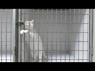 Кот - король побега из клетки @ Superhit.TV