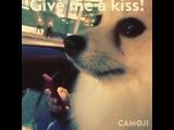 @dexter_vlszhr #givemeakiss #kiss #dog #pomeranian #pom #mypet