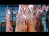 Британец   фриган  питается мясом сбитых на дороге животных