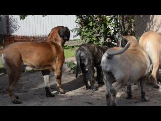 Охота на сливы ( Лёня, Фиона, Полина, Сева, Кирюша и Броня)