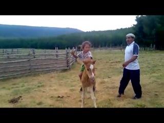 Любовь к лошадям у тувинцев с детства.