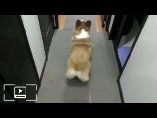 Собака танцует тверк
