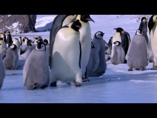 Юля с Мышусей в Антарктиде (хромакей проба №1)