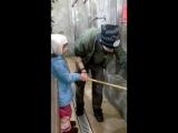 кормление пумы в зоопарке