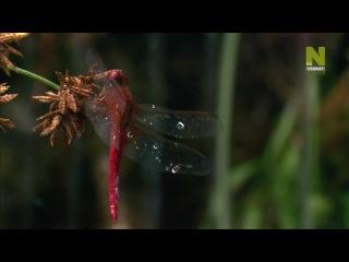 Необыкновенный мир / Unusual World / Школа выживания в мире насекомых / Три жизни в одной / 2 серия из 3 (2008)