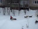 Стая диких собак нападают на молодую женщину в парке