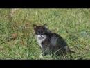 «Кошки беспородные» под музыку Красивая инструментальная - Музыка - это откровение более высокое, чем вся мудрость и философия.