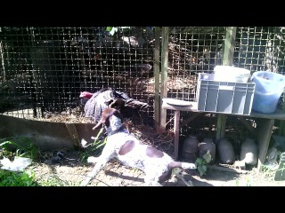 Папин Форинт) 4 мес