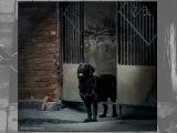 Черный пес Петербург, laitiona.ru фотосъемка СПб Александрова И. лабрадор