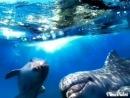Мои любимчики, это Дельфинушечки...)))