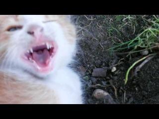 Кот и кролик друзья на веке(Эдди и Рыжий)