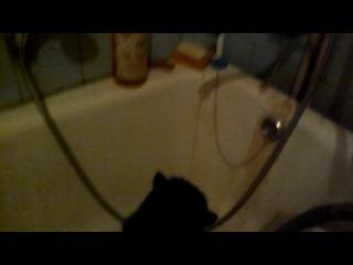 мой кот хочет пить