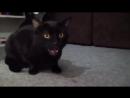 Поющий кот прикол ржач юмор смешно лол видео смех топ лучшее угарно шок эксклюзив я мое новинка фильм 2015
