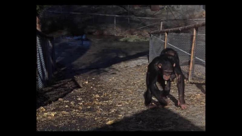 Дактари / Daktari. (США) (1966) (1 сезон ,8 серия)