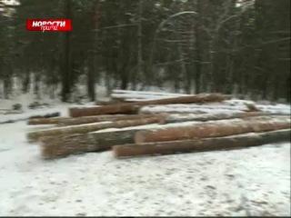 Спиленный под Красноярском лес теперь вывозят по ночам (27 ноября)