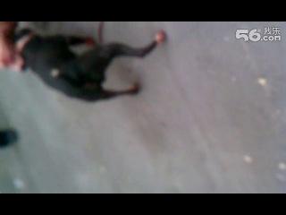 Собачьи бои аргентинский дог vs питбуль