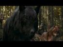 еванесенс-волки