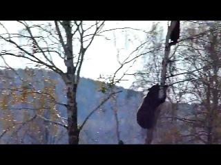 Медведь лезет за мужиком на дерево Типичная русская Деревня Ничего необычного все сто раз бывали в такой ситуации