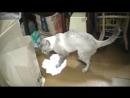 Как кот полы моет