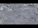 Форелевое хозяйство - 1. р. Мчишта. Абхазия.
