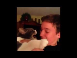Кот который не любит поцелуи