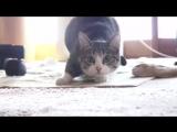 Смешное видео про котов. Прикольный танцующий кот