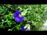 D 2 под музыку Доминиканская - АнгельскиСчастливая. Picrolla