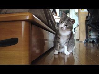 Прикол с котом! HD 720 Приколы Животные Кошка Кошак Котэ Жесть Ржач До слез Смешно Угар Собака Панда Панды Милота Милаха Няш