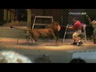 Беар Гриллс Кадры спасения - Животные