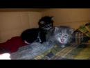 Срочно! Самые замечательные котята ищут дом!