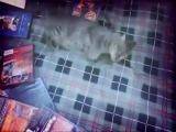 Jynx Maze, Foxy Di, Adriana Chechik, Sophie Dee, Sasha Grey, Georgia Jones, Tori Black, Teagan Presley, Sunny Leone, Shyla Stylez, Roxy Reynolds, Kimberley Kane,