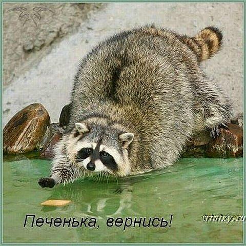 http://cs546.vkontakte.ru/u4929922/94629478/x_1d9abe24.jpg