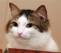 Картинки коты из контакта