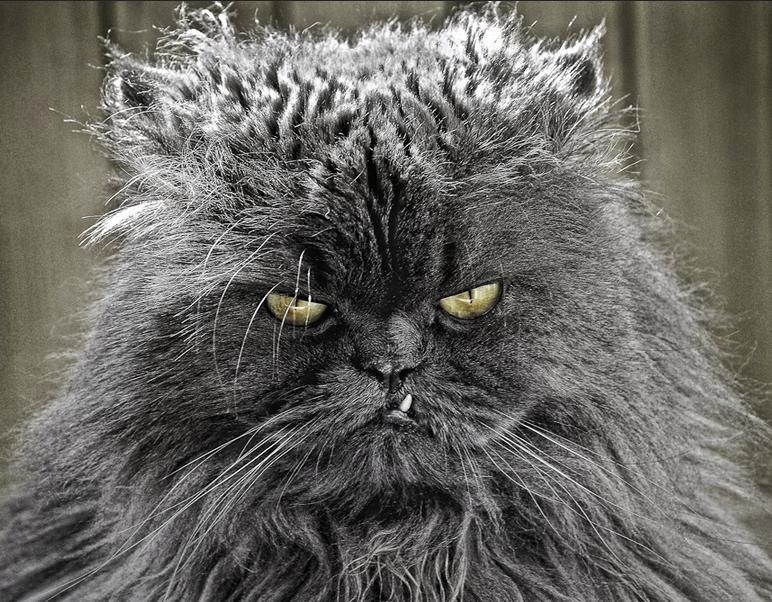 Байрам, злой кот прикольная картинка
