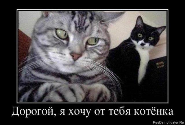Дорогой, я хочу от тебя котенка!