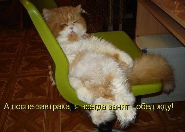 После завтрака я всегда занят, жду обед
