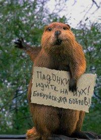 Игорь Владимирович, 24 августа 1987, Санкт-Петербург, id3434055